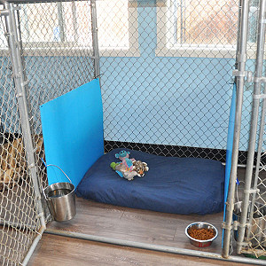 Penticton Boarding Pet Kennels